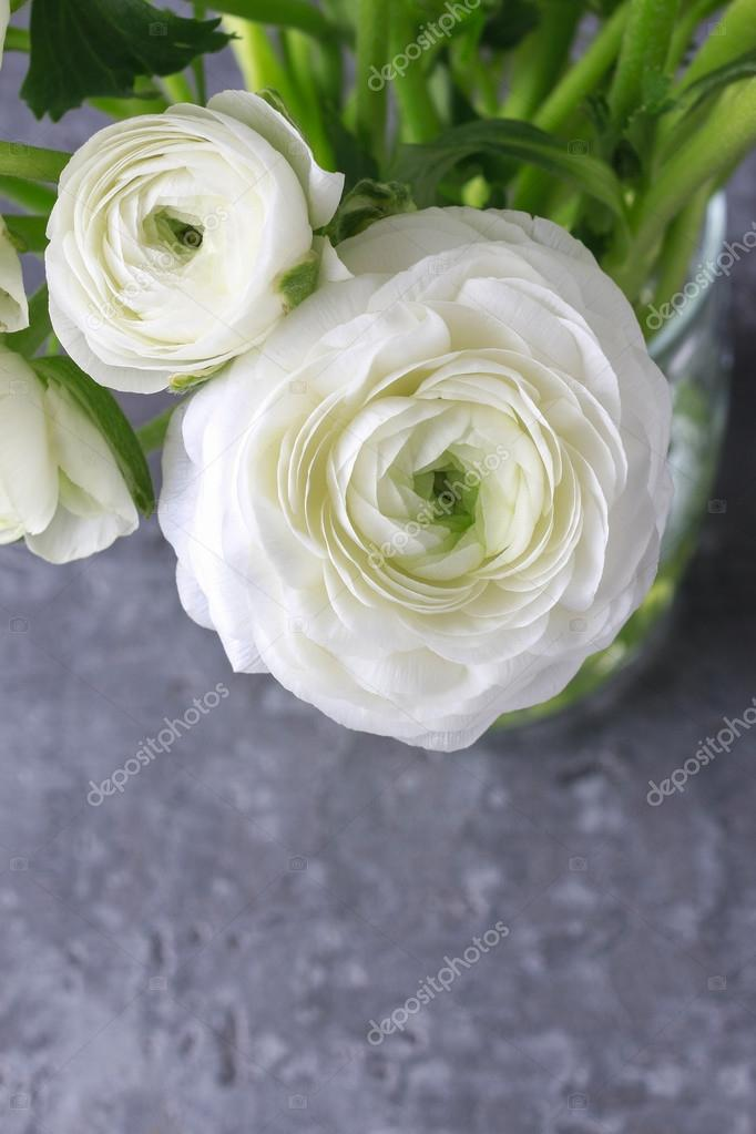 Bouquet of white ranunculus flowers persian buttercup flowers bouquet of white ranunculus flowers persian buttercup flowers in paper cornet photo by agneskantaruk mightylinksfo