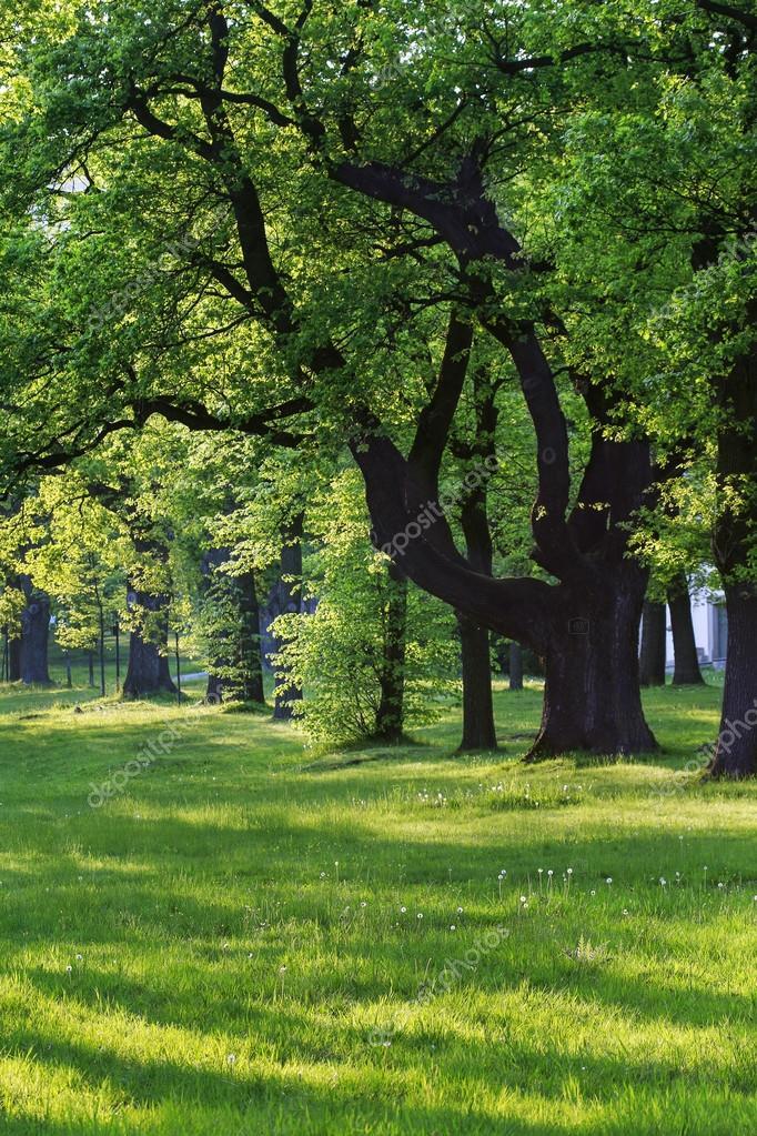 Schöne Bäume im Garten — Stockfoto © agneskantaruk #120881636