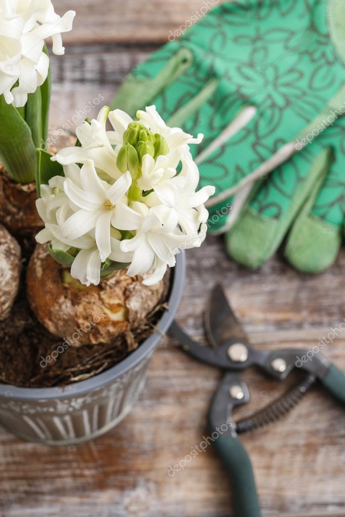 Weiße Hyazinthe Blumen und Gartenzubehör — Stockfoto © agneskantaruk ...