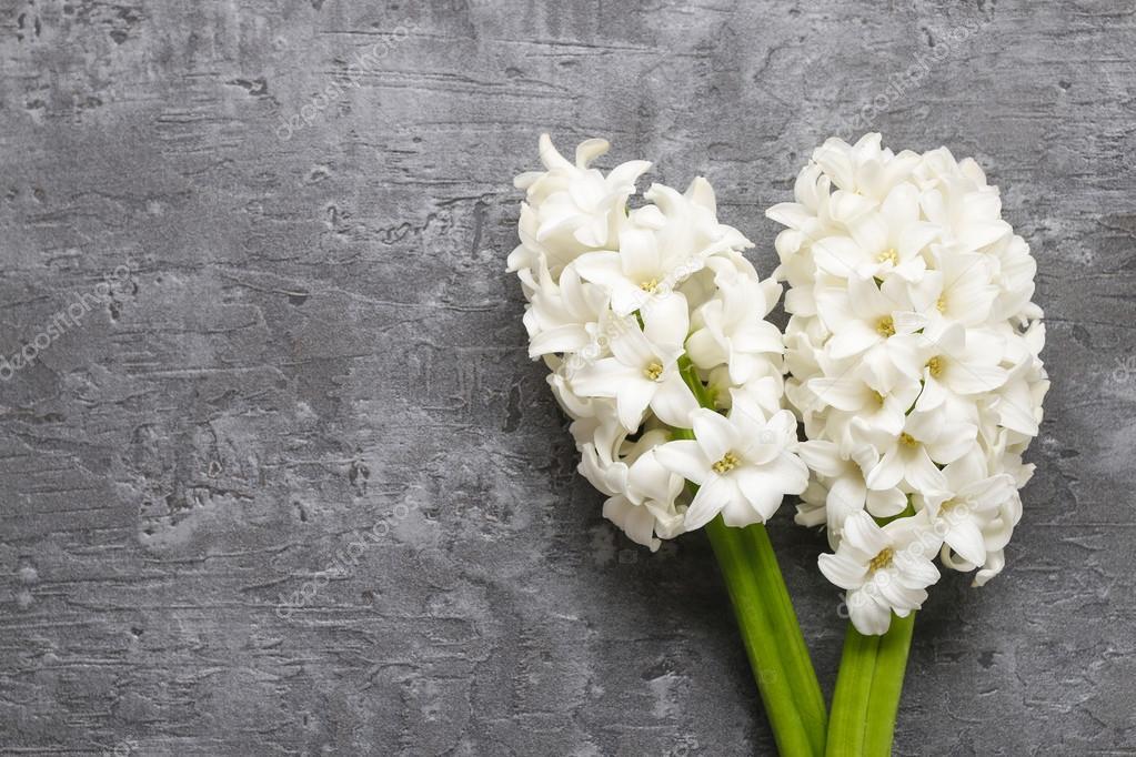 Weiße Hyazinthe Blumen auf grauen Stein-Hintergrund — Stockfoto ...
