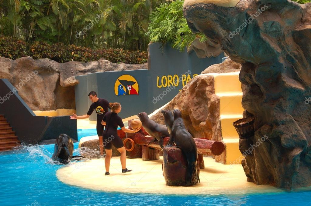Sea lions show in Loro Park in Puerto de la Cruz on Tenerife