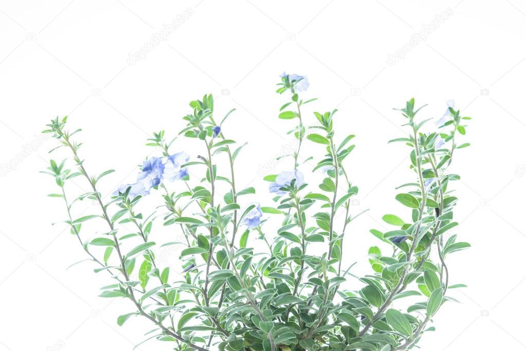 Plante Verte Avec Fleur Violette Sur Fond Blanc Photographie