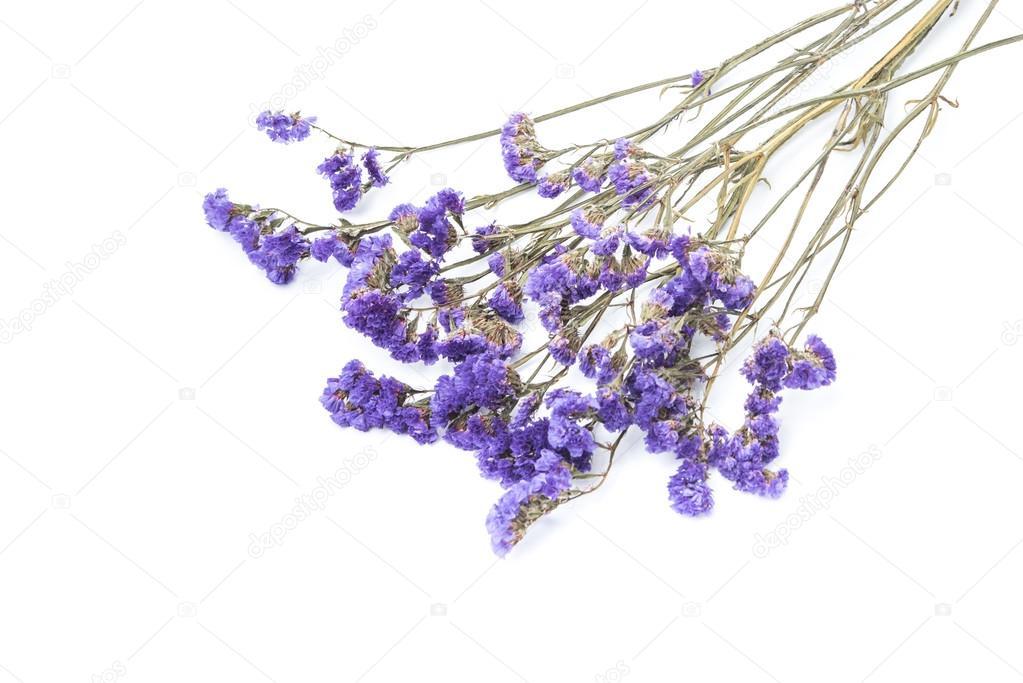 Dry statice flower on white background stock photo bunwit 116851738 dry statice flower on white background stock photo mightylinksfo