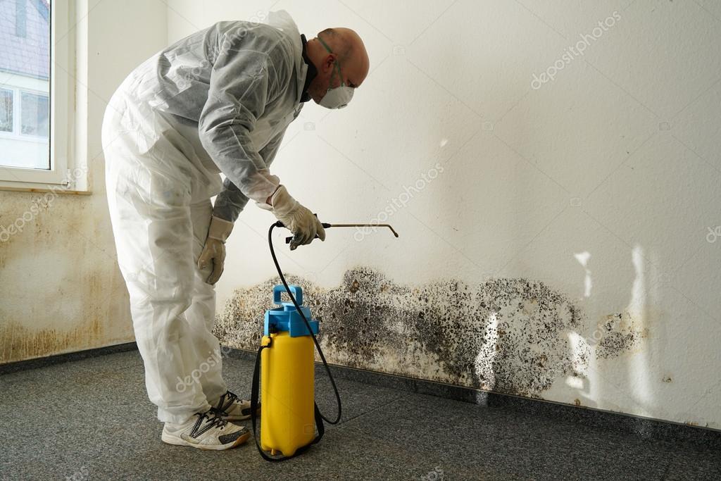Как бороться с плесенью и грибком на стенах квартиры