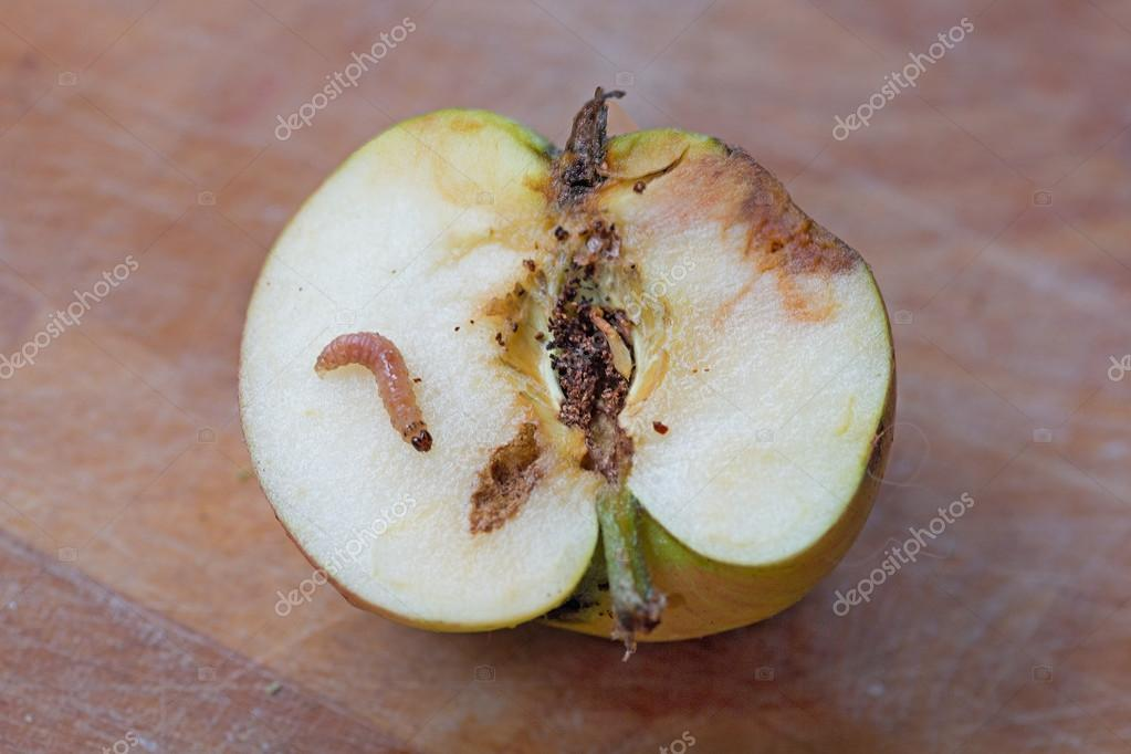 UFO 01 - 04 11  2018 r. Long Weekend - Page 4 Depositphotos_119556592-stock-photo-one-wormy-apple-with-larva