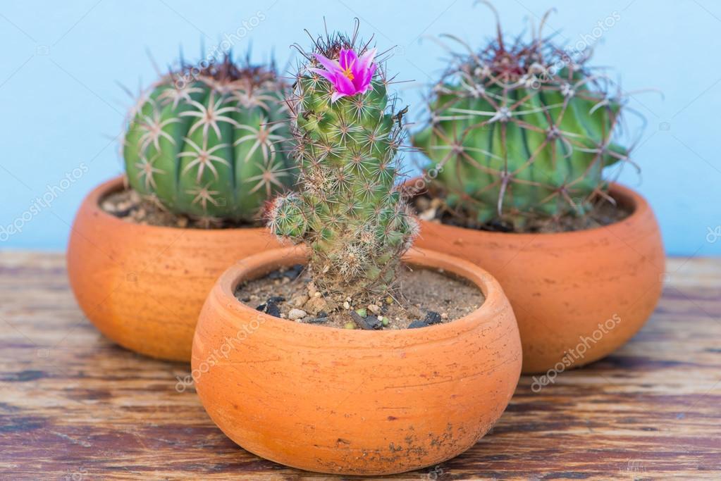 Cactus Avec Fleur Rose En Pot De Fleur Sur La Table En Bois