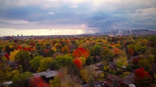 Montreal und schöne Bäume