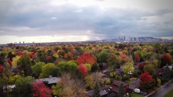 Montreal with beautiful Trees