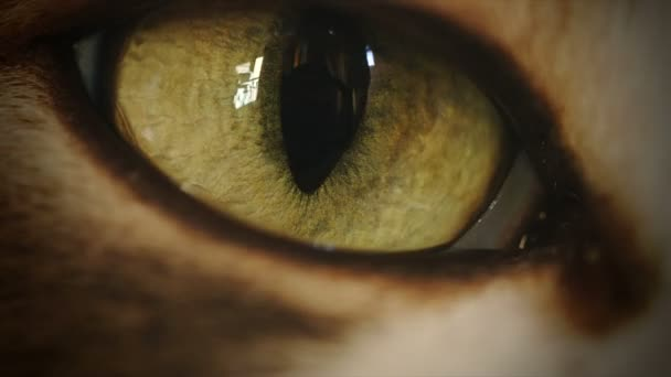 4K Cat Eye Moving and Watching Timelapse