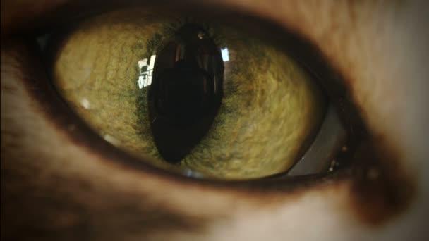 Cat Eye Super Macro Transition Zoom-In