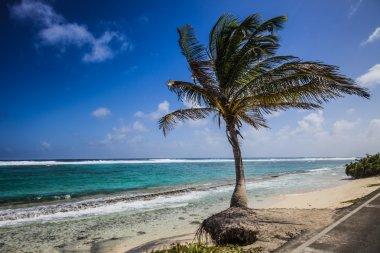 Big Palm Tree Facing the Beach