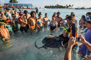 People Touching a Stingray in shallow water