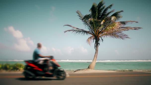 Pálmafa és a foltos motorkerékpár