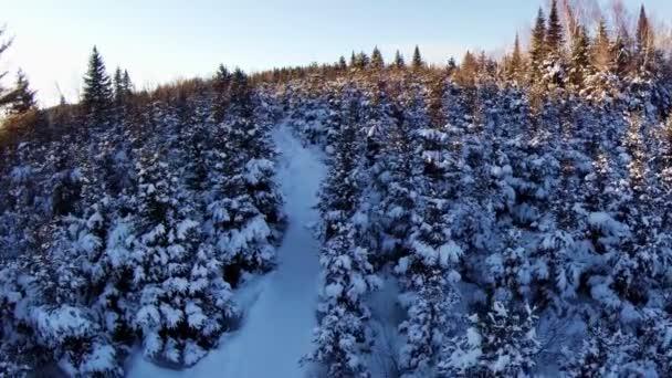 Les a cesta při západu slunce