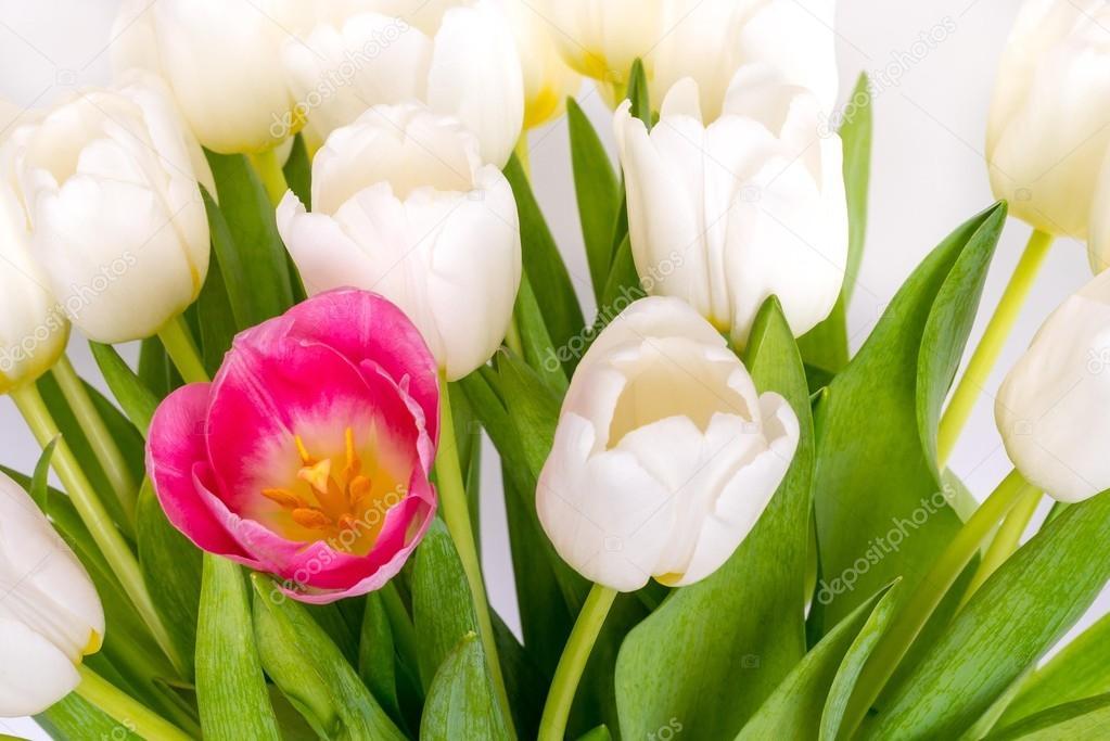 Mazzo da parecchi tulipani bianchi e primo piano di un for Disegni del mazzo del secondo piano