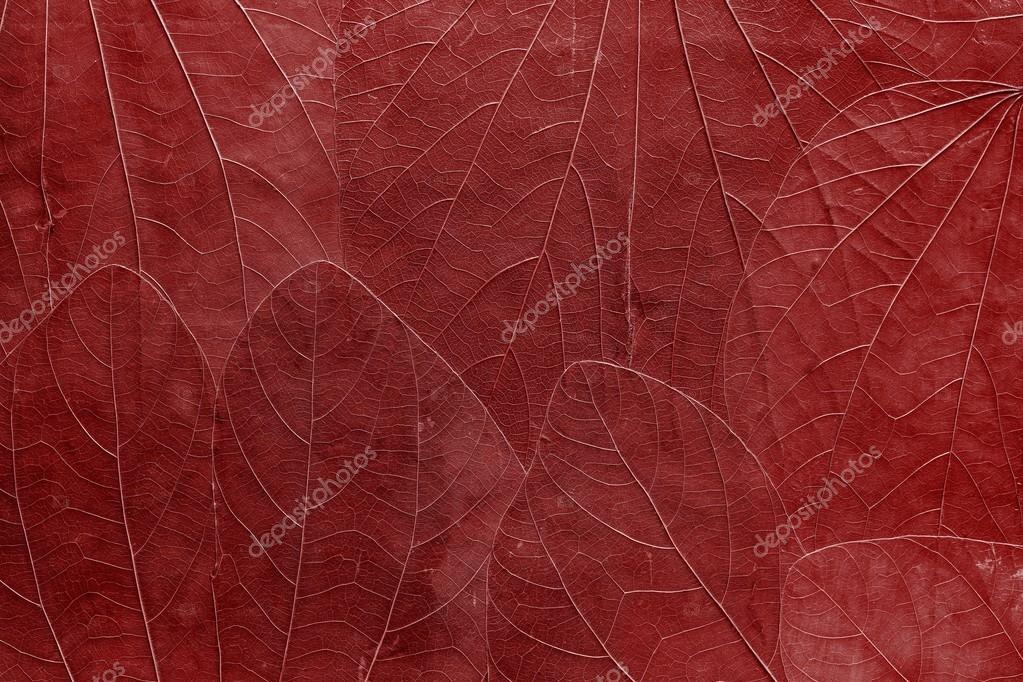 Immagini Rosso Vivo Sfondo Da Foglie Di Colore Rosso Vivo Foto