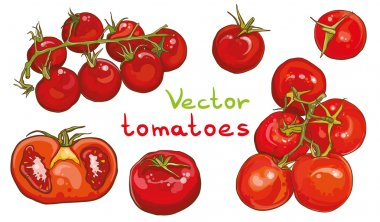 Vector set. Illustration of cherry tomatoes and tomatoes.