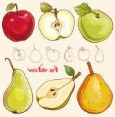 Vektoru Čerstvá jablka a hrušky