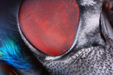 Fly compound eye surface