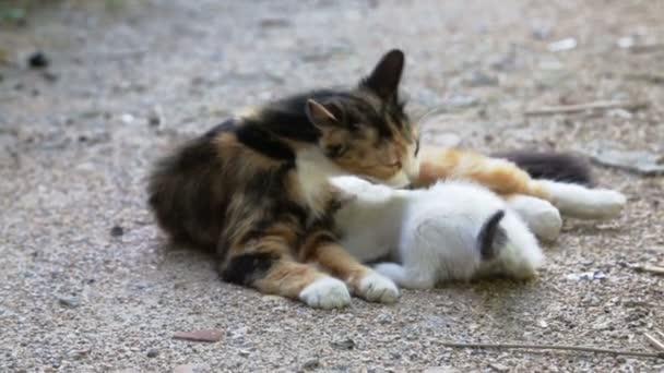 Kočka matka čisticí kotě na ulici