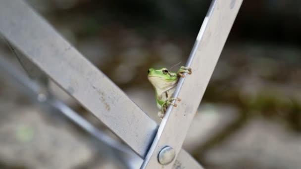 Grüner Frosch auf Stuhl im Garten