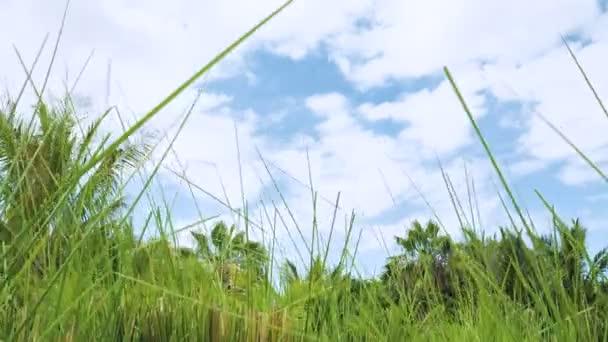 Tropické přírody pozadí