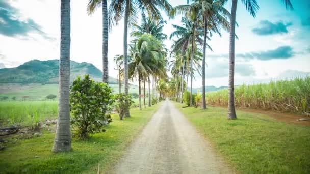 Dlouhá cesta s palmami