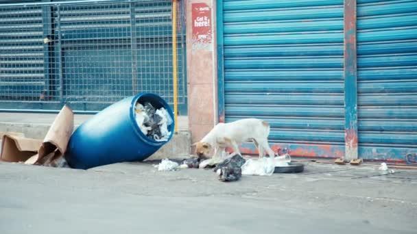 Streunender Hund Suche nach Nahrung in mauritius