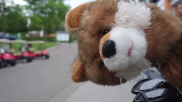 Fox headcover presso campo da golf