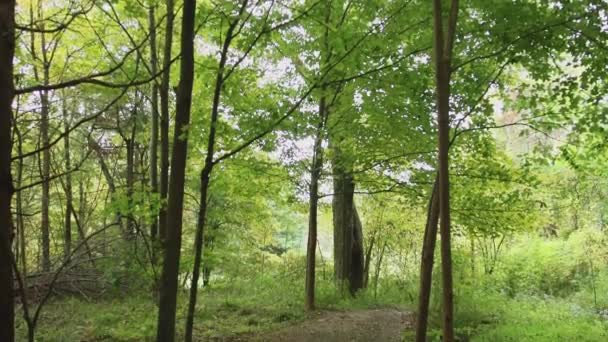 Cesta přes lesy