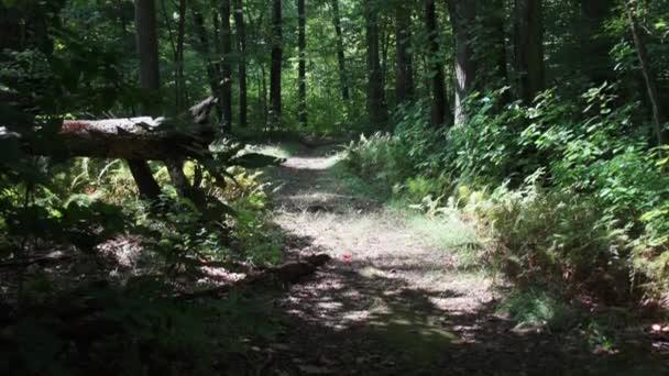 cesta přes zelený Les