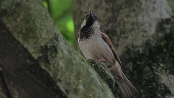 Zblízka ptáka ve stromu