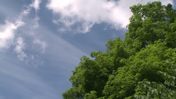 Při pohledu nad stromy na modrou oblohu a bílé načechraný mraky (část 2 ze 2)