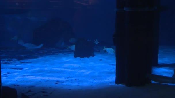Mystic Aquarium Exhibits (5 of 7)