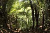 Fotografie stromy v tropickém lese