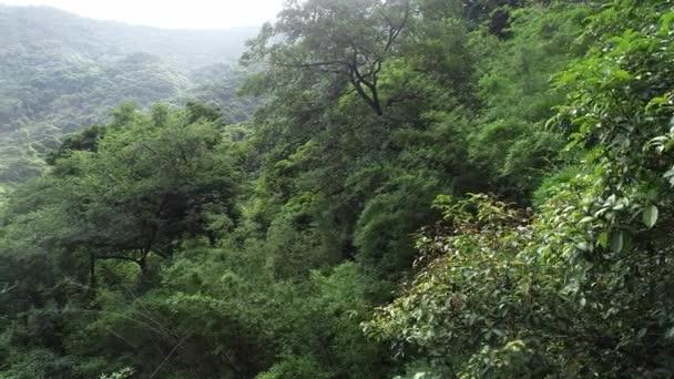 letecký pohled na zelené stromy v lese