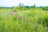 Větrné květy a tráva rostou na velkém poli na jaře