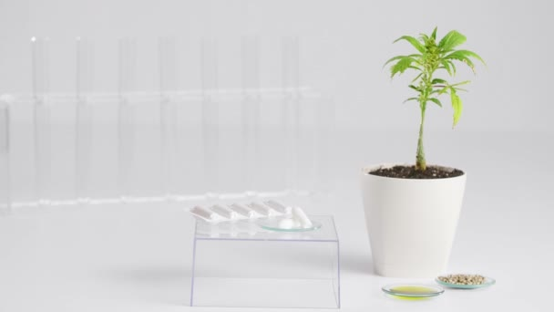 Hand picking up a pack of rectal plugs standing on a transparent glass cube. Hemp seeds, CBD oil, marijuana plant and test tubes are positioned around.
