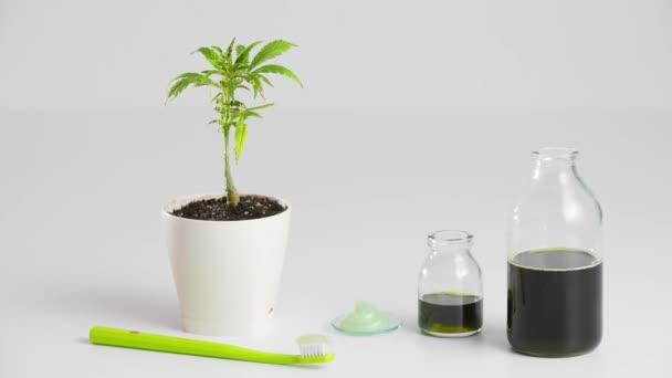 Hand nimmt eine Zahnbürste mit aufgetragener Zahnpasta. Um ihn herum eine Marihuanapflanze in einem weißen Blumentopf, CBD-Produkte in Form von Öl in einer Flasche und eine Probe CBD-Paste. Der Hintergrund ist überwiegend weiß.