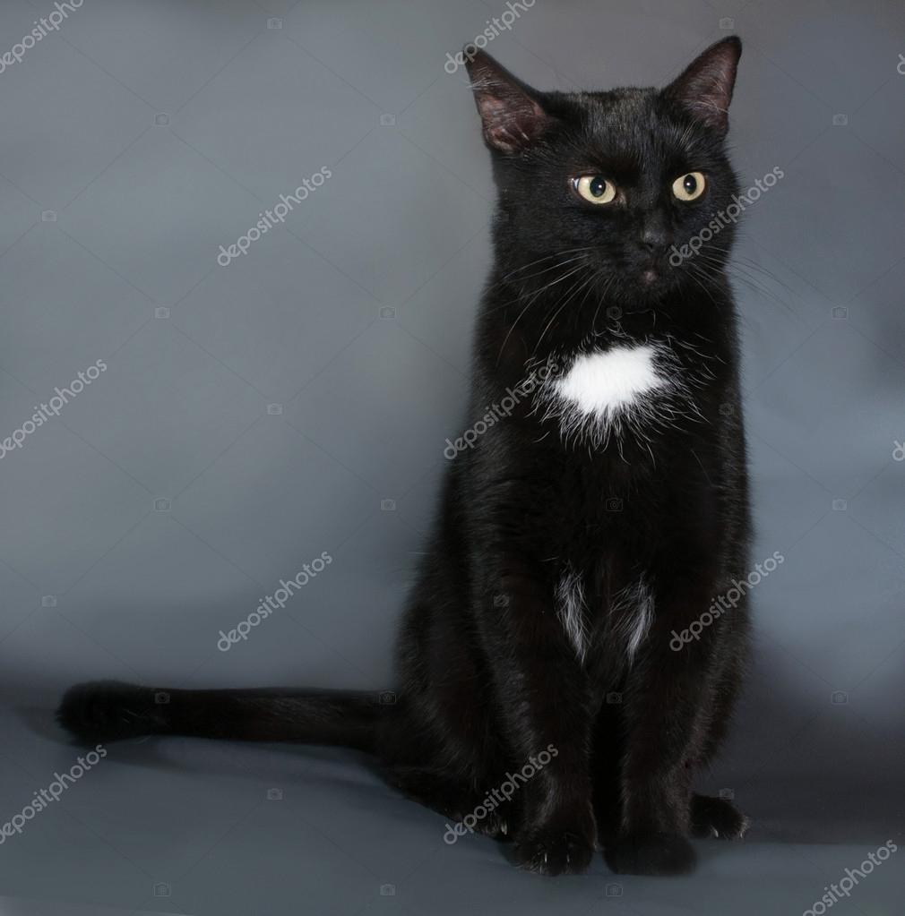 Чёрно белый серый кот