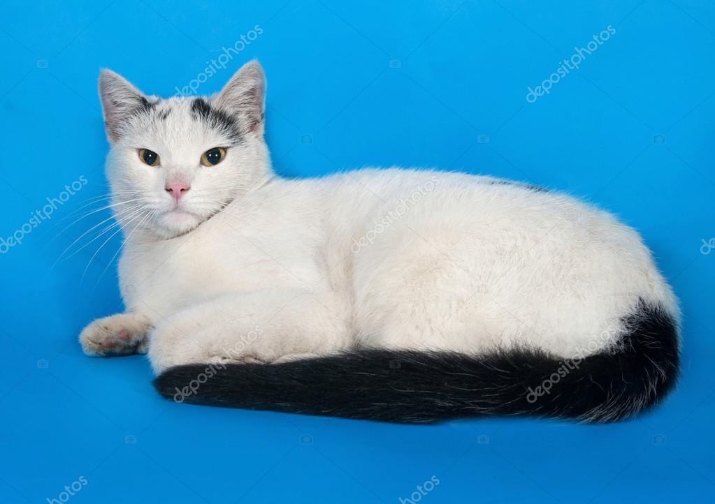 Gatto Bianco Con Macchie Nere Si Trova Sullazzurro Foto Stock