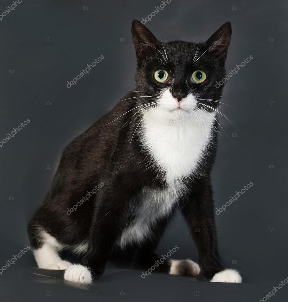 svart vit katt