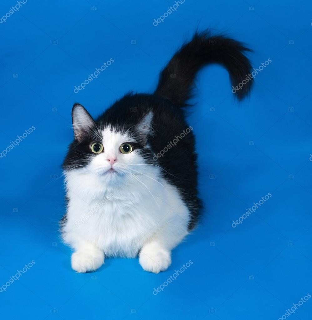 černá mokrá kočička zadek