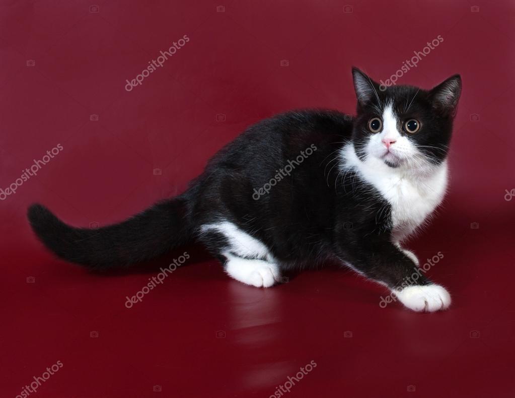 бургундские кошки