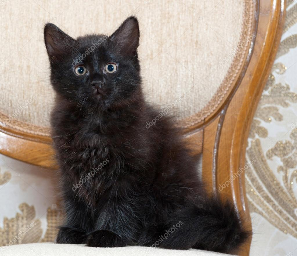 Černé chlupaté kočička vids