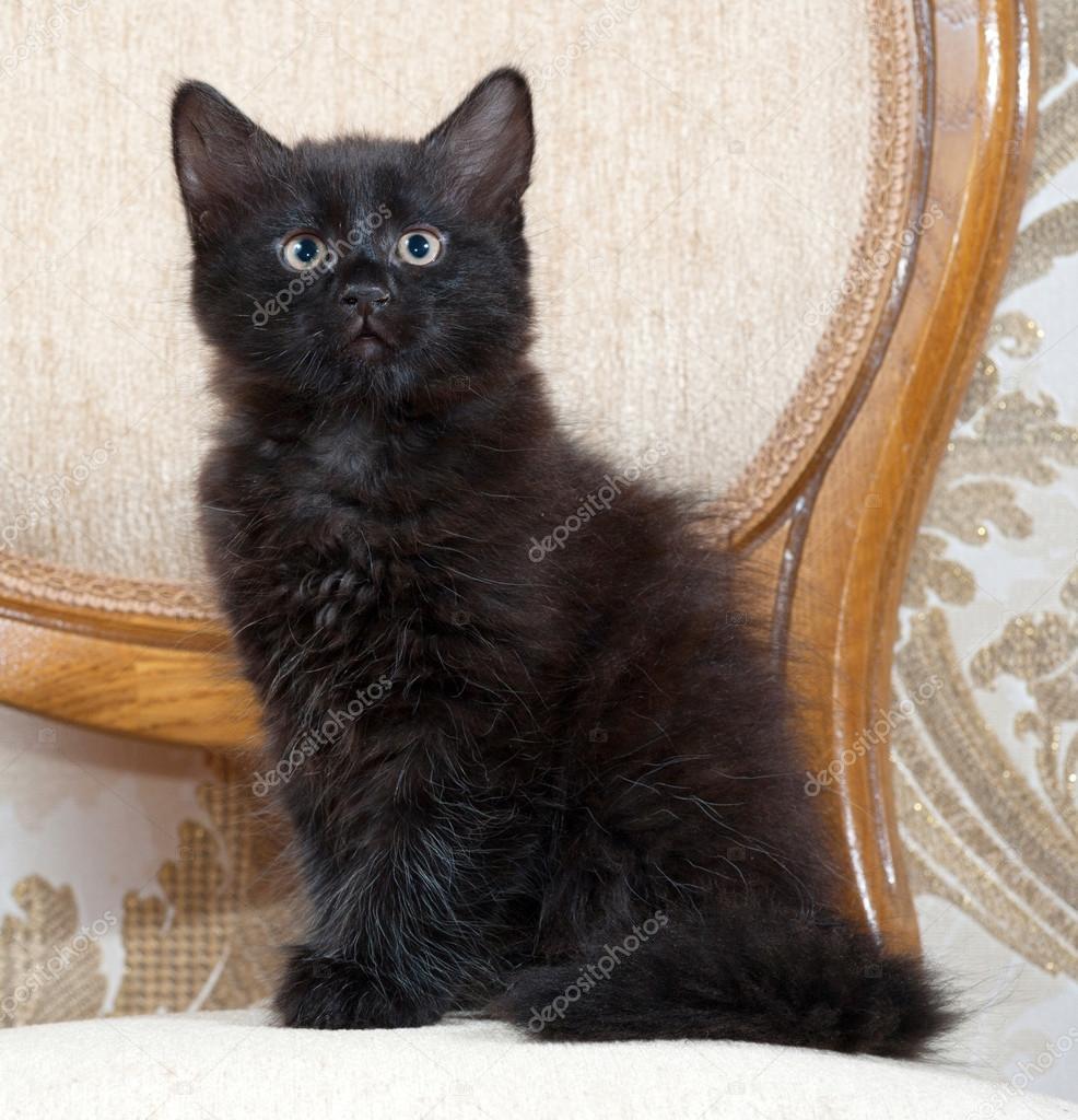 Seznamte se s Gizmo, kočka jejíž oči vás můžou zhypnotizovat!