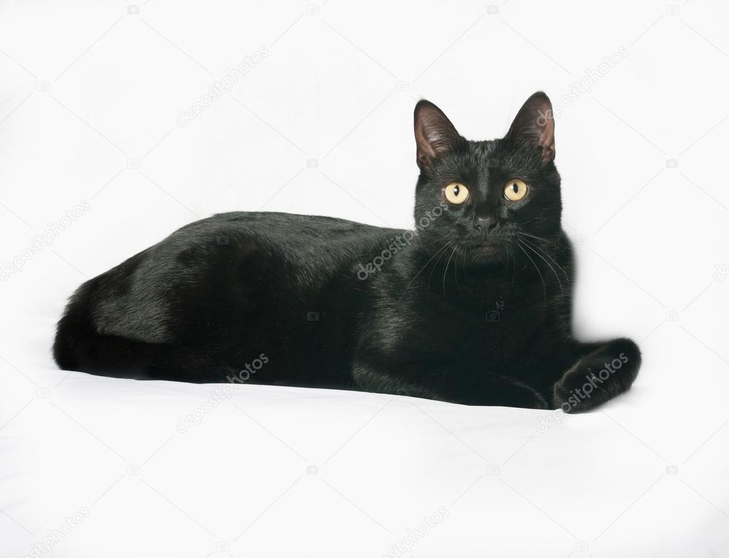 Czarny Kot Leży W Szare Zdjęcie Stockowe Darzyhanna 84696894