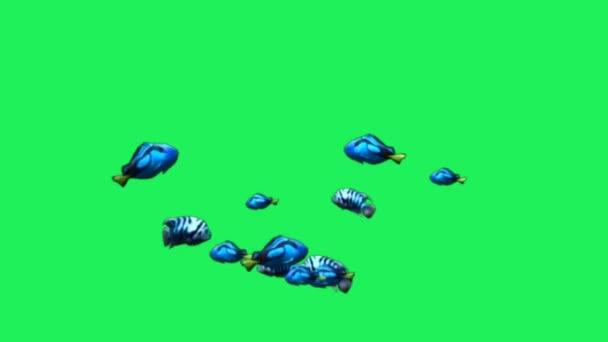 Animation blauer Zeichentrickfisch auf grünem Hintergrund.