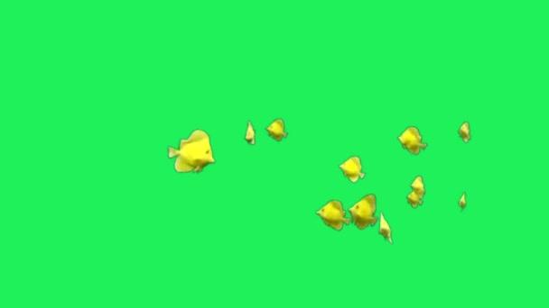 Animation gelber Zeichentrickfisch auf grünem Hintergrund.
