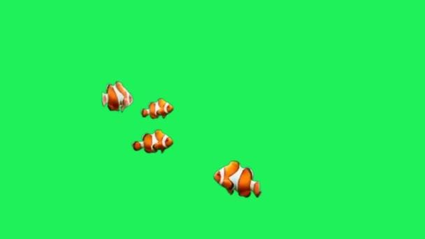Animation Orange Cartoon Fisch auf grünem Hintergrund.
